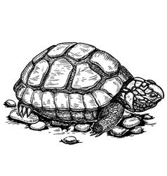 engraving turtle vector image vector image