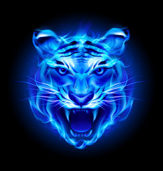 head of fire tiger in blue on black background vector image