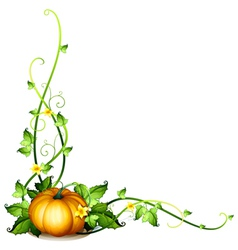 A pumpkin vine decor vector