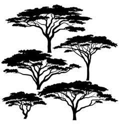 Acacia tree silhouettes vector image