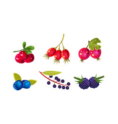 fresh ripe berries set cranberry dogrose vector image