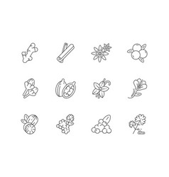 Indian spices linear icons set vector
