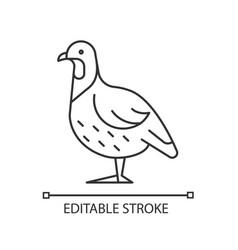 Partridge linear icon vector