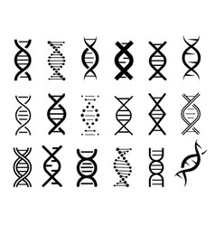 set simple dna symbols in black on a white vector image