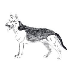 German Shepherd hand drawn isolated on vector image