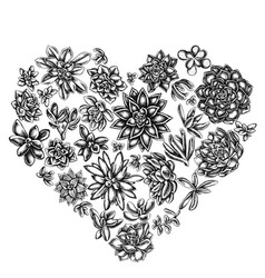 Heart floral design with black and white succulent vector