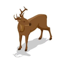 isometric deer front view proud vector image