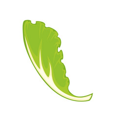 Leaf of green salad vector