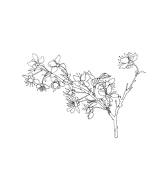 Line drawing blooming flowers on branch vector image