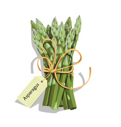 printasparagus vegetable stem vector image