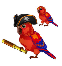 Red parrot in a cocked hat pirate with a telescope vector