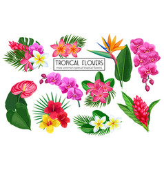 set tropical flowers vector image