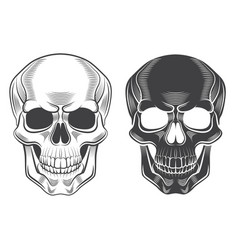 skull monochrome isolated on white vector image