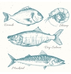 Hand drawn sea life vector
