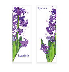 hyacinth banner vector image vector image