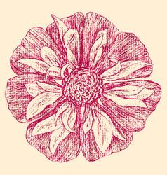 A sketch an inflorescence red garden flower vector