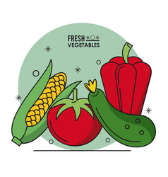 colorful poster fresh vegetables cob corn tomato vector image