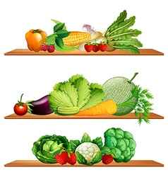 Fruits and vegetables on shelves vector