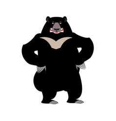 Himalayan bear angry emotion aggressive wild vector