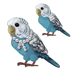 Wavy blue parrot or budgerigar isolated on white vector