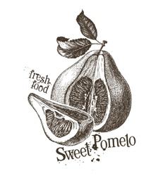 pomelo logo design template fresh fruit vector image vector image