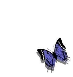 Butterfly on paper 06 vector