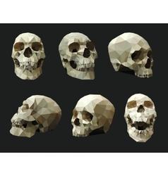 set human skulls vector image