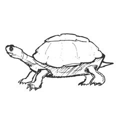 turtle vector image