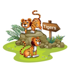 Two tigers with a wooden arrow board vector