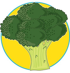 broccoli graphic vector image vector image