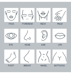 Parts of human body icons vector image