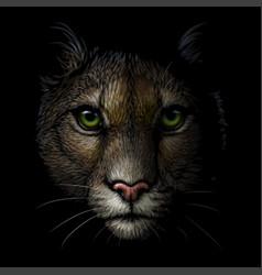 Cougar color portrait a mountain lion vector