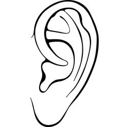 Human ear vector image