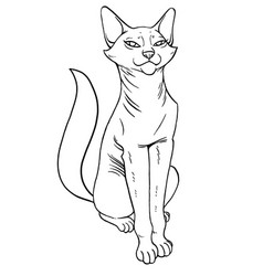 Abyssinian pretty cat sitting vector