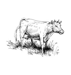 Cow grazing cattle animal husbandry livestock vector