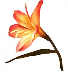 Amaryllis vector