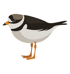 Collared plover on white background vector