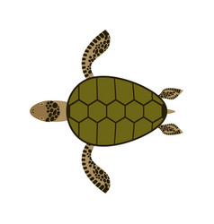 sea turtle isolated water reptile on white vector image