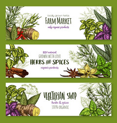 Sketch farm banners of spices and herbs vector
