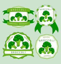 the green broccoli vector image
