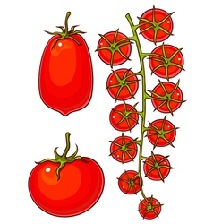 tomatoes and cherry vector image