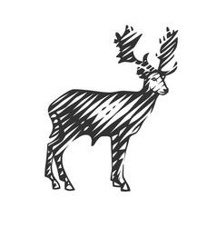 beautiful deer vector image