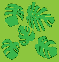 monstera leaves set green tropical leaves vector image