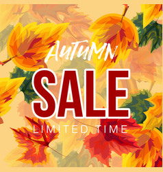 vivid leaves in design of autumn sale banner vector image