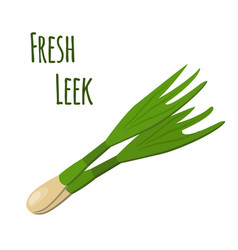 fresh leek made in cartoon flat style vector image