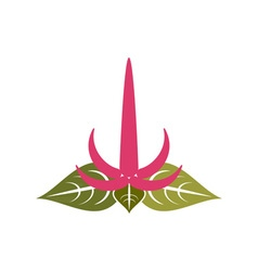 Amaranth-flower vector
