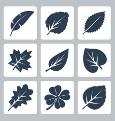 Tree leaves icons set vector