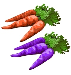 Classic carrot and purple colors one vector image vector image