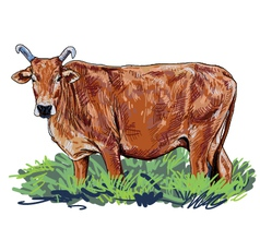 Curious cow vector image vector image