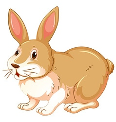 Brown rabbit on white background vector image